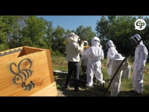 Association « Bzzz » : l'apiculture participative